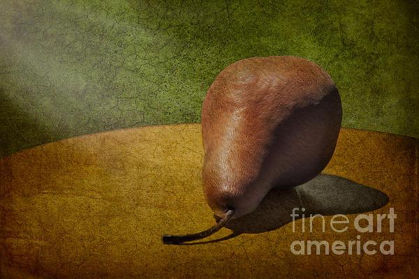 Sunlit Pear Print by Susan Candelario