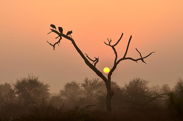 Fotosas Photography - Sunrise at Bharatpur