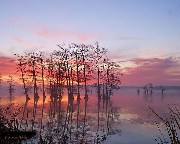 Sunrise At Reelfoot Lake Print by J Larry Walker