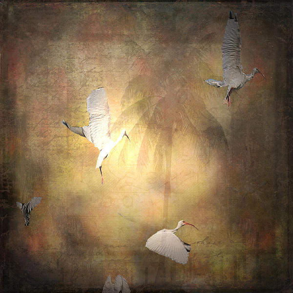 Sunrise Flight Print by Irma BACKELANT GALLERIES
