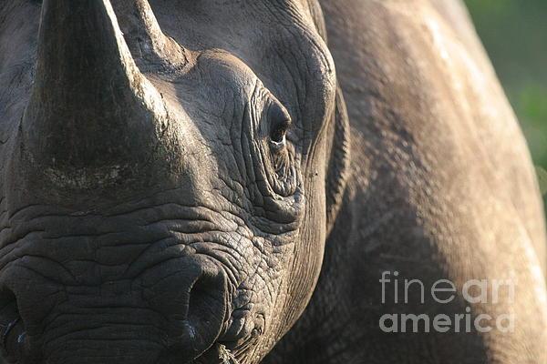 Sunrise Rhino Print by Alison Kennedy-Benson