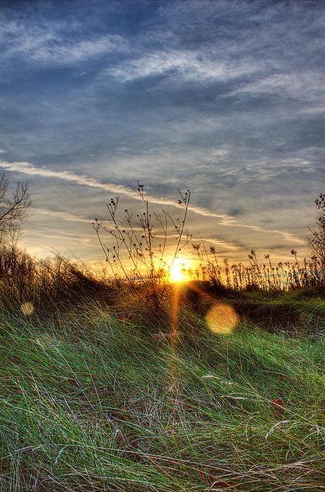 Sunrise Through Grass Print by Tim Buisman