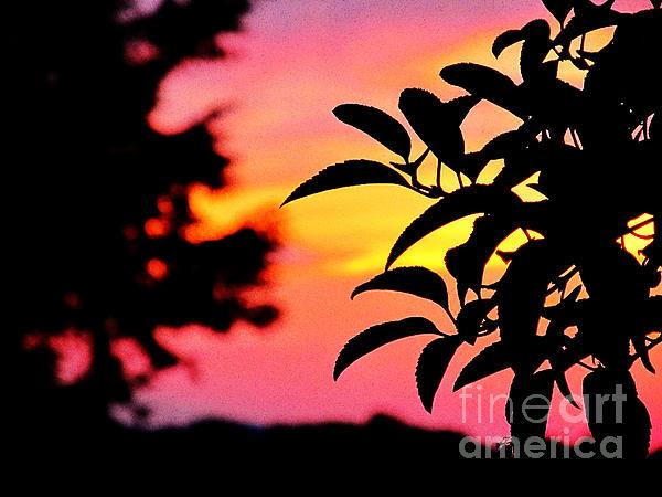 Sunset 365 61 Print by Tina M Wenger
