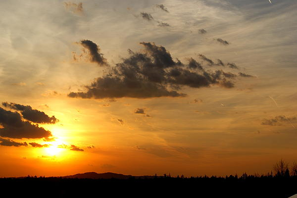 Sunset In Bavarian Forest Print by Adam  S