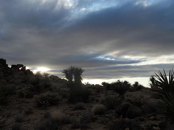 Sunset In The Desert Print by James Welch