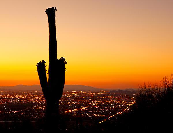 Susan  Schmitz - Sunset on Phoenix With Saguaro Cactus