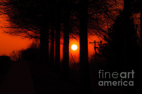 Sunset Silhouette Painterly Print by Andee Design