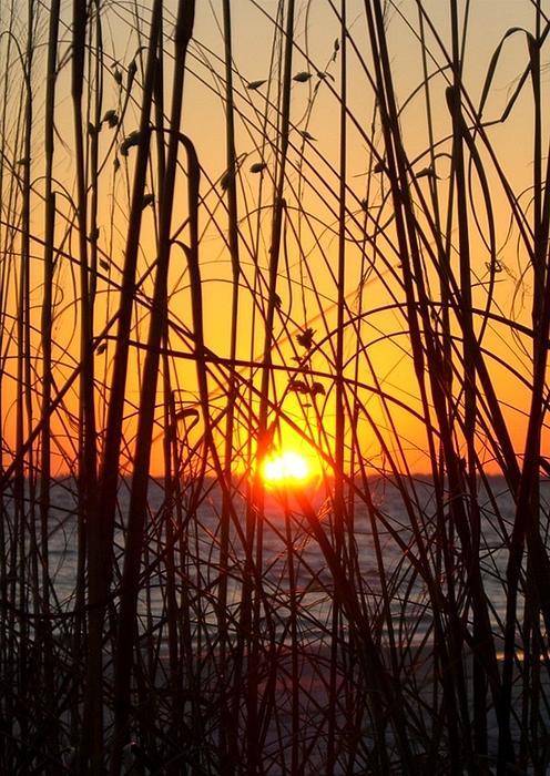 Barbie Corbett-Newmin - Sunset Through Grasses
