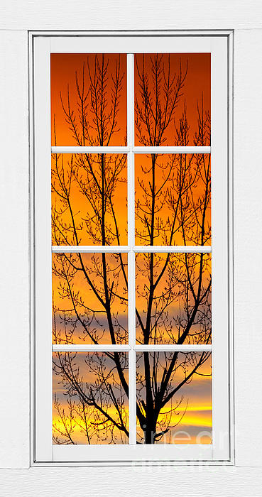 James BO  Insogna - Sunset Through the Trees Window View