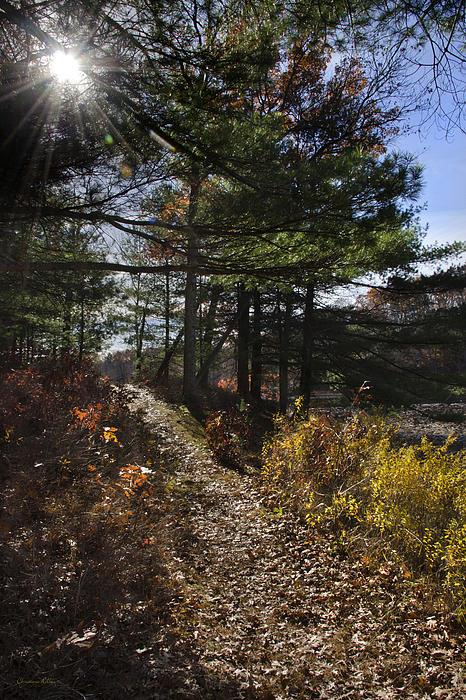 Sunshine Pathway Landscape Print by Christina Rollo
