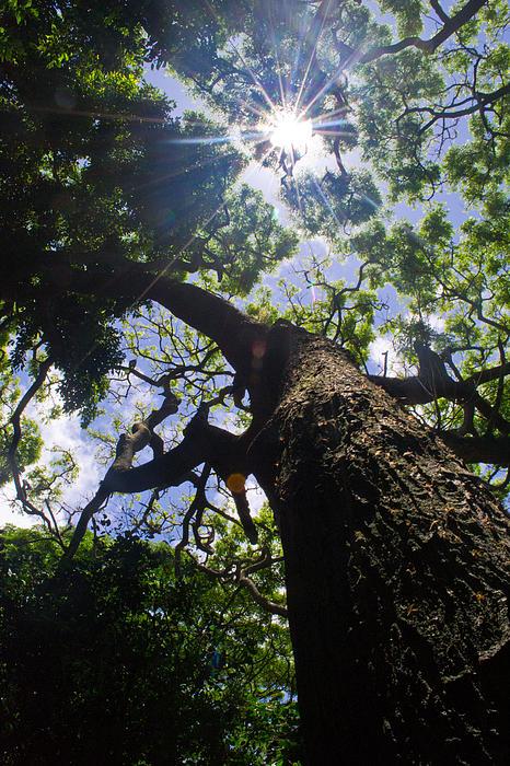 Sunshine Through The Trees Print by Matt Radcliffe