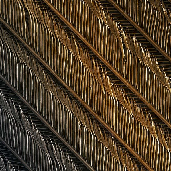 Swallow Feather Detail, Sem Print by Power And Syred