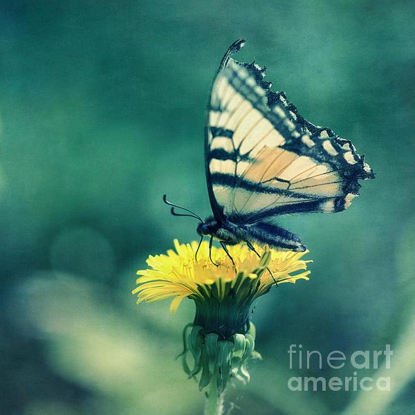 Swallowtail Print by Priska Wettstein