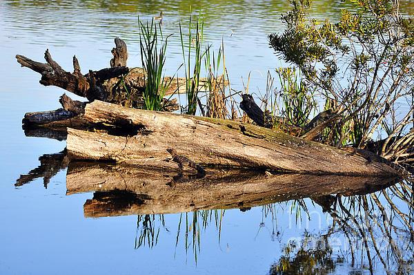 Swamp Scene Print by Al Powell Photography USA