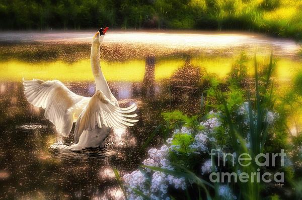 Swan Lake Print by Lois Bryan