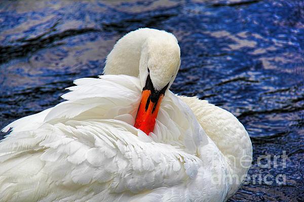Swan Lake Print by Mariola Bitner