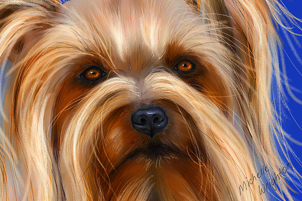 Sweet Silky Terrier Portrait Print by Michelle Wrighton