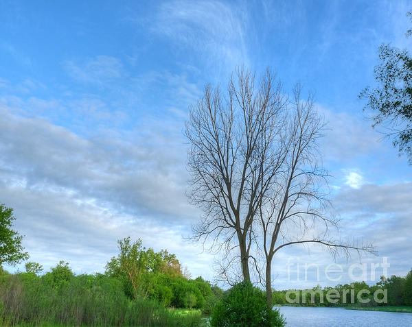 Swirly Sky And Tree Print by Deborah Smolinske