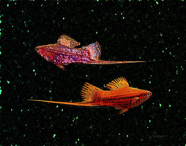 Swordfish Print by Mario  Perez
