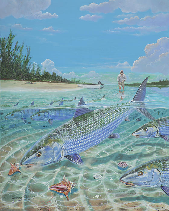 Tailing Bonefish In003 Print by Carey Chen