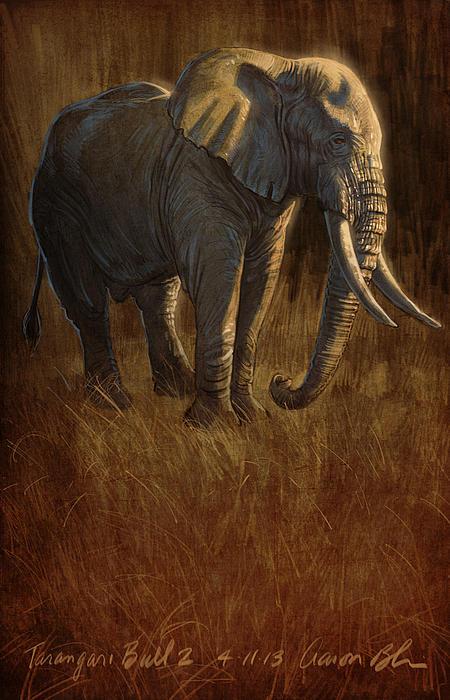 Tarangire Bull 2 Print by Aaron Blaise