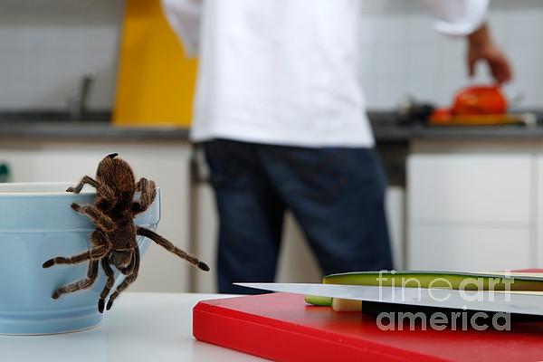 Tarantula Trying To Escape Print by Emilio Scoti