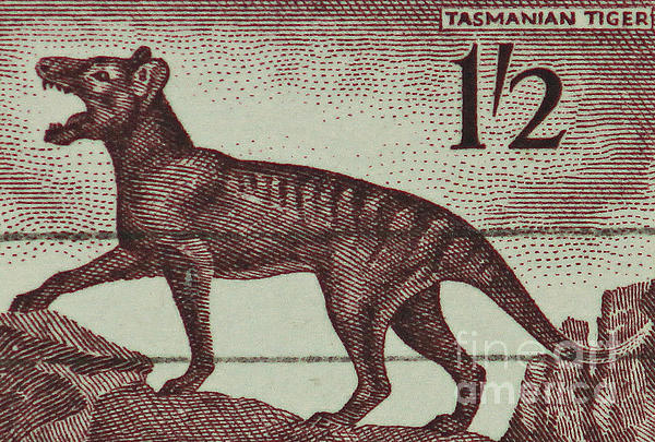 Tasmanian Tiger Vintage Postage Stamp Print by Andy Prendy