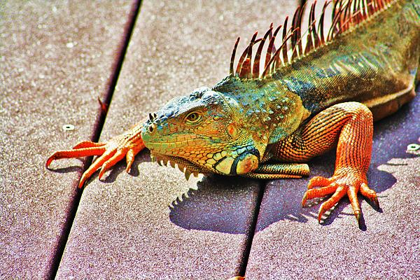 Chuck  Hicks - Techno Colored Iguana