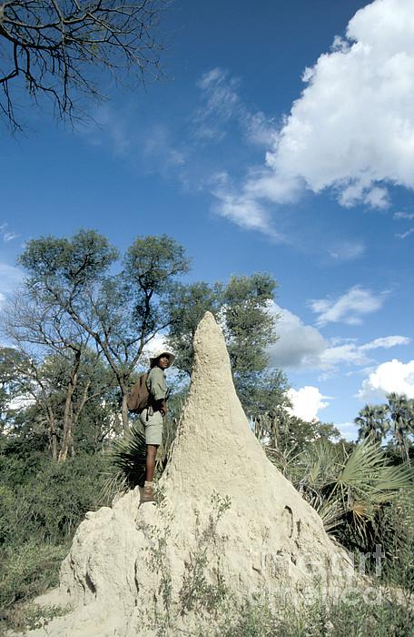 Termite Mound Print by Mark Newman
