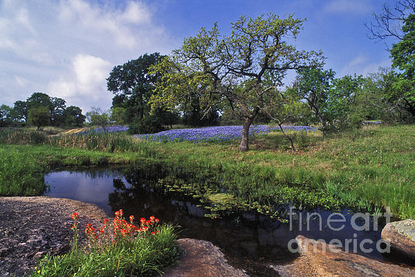 Texas Hill Country - Fs000056 Print by Daniel Dempster