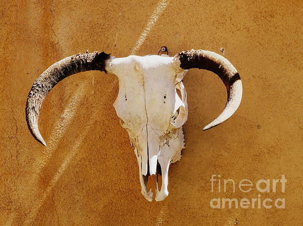 Texas Longhorn Print by Avis  Noelle