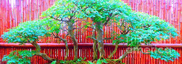 The Art Of Bonsai Print by Ann Johndro-Collins