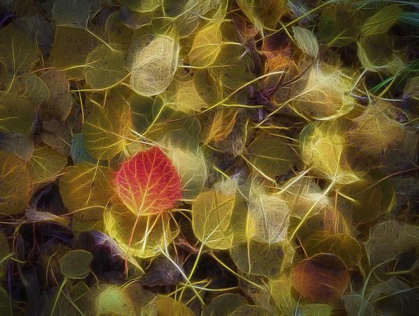 Veikko Suikkanen - The Aspen Leaves