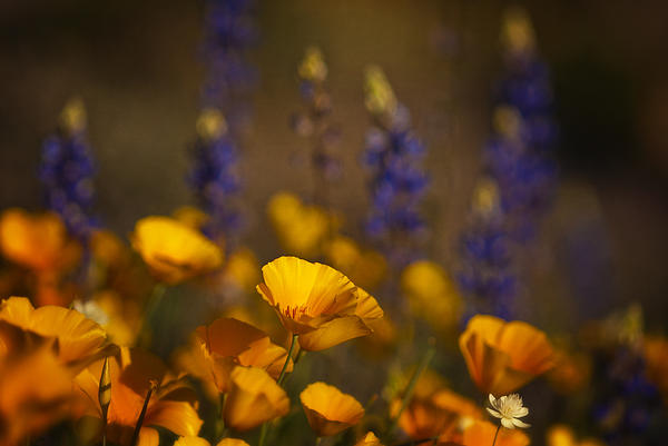 Saija  Lehtonen - The Beauty of Spring