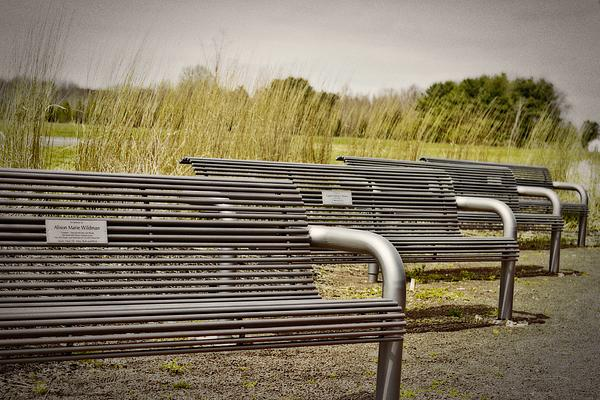 The Benches Print by Tom Gari Gallery-Three-Photography