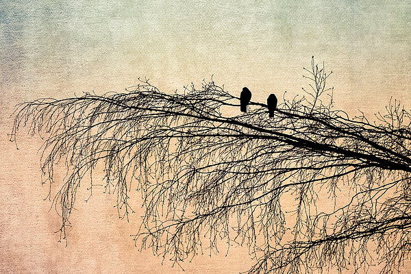 The Branch Of Reconciliation 2 Print by Alexander Senin
