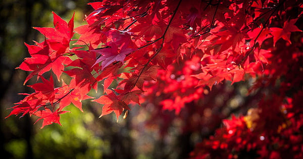 Patrice Zinck - The Color of Fall