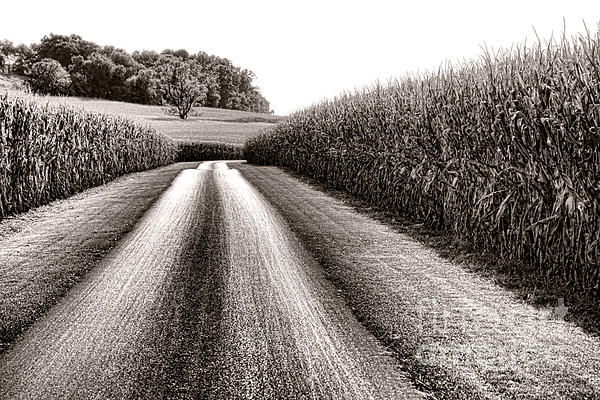 The Corn Road Print by Olivier Le Queinec