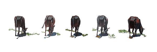 The Cows Print by Usha Shantharam
