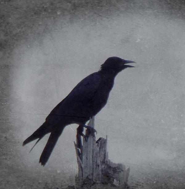 Justin Ivins - The Crow