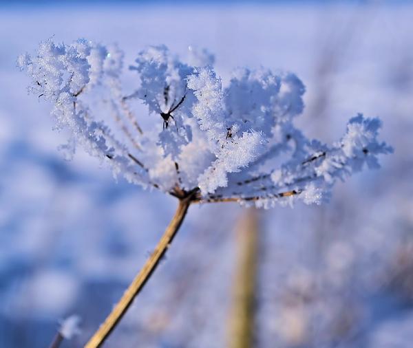 The Crystal Flower Print by Dave Woodbridge