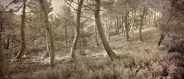 The Dance Of The Forest Print by Guido Montanes Castillo