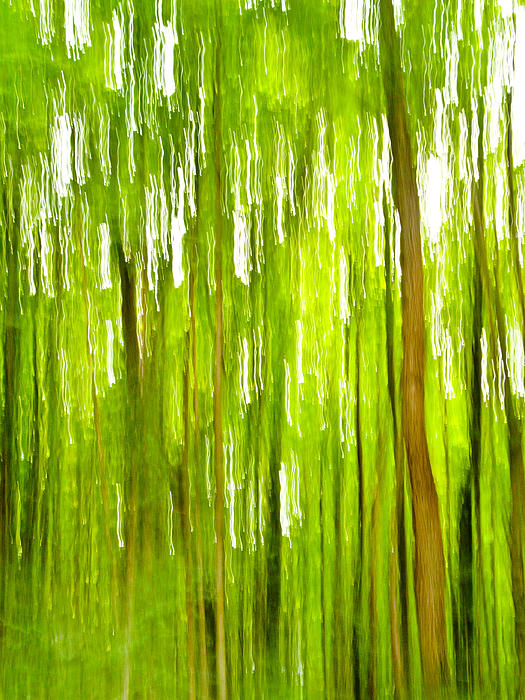 The Emerald Forest Print by Bill Gallagher