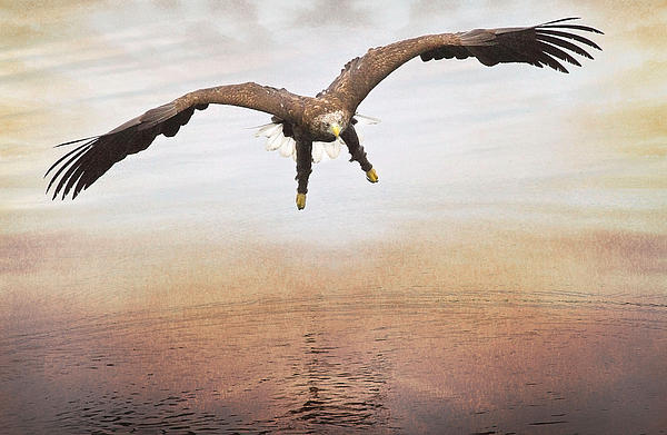 The Evening Eagle Print by Roy  McPeak