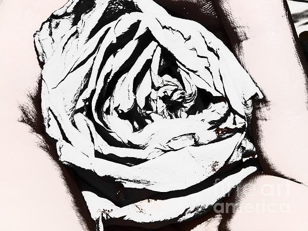 The Eye Of A Rose Print by Thommy McCorkle