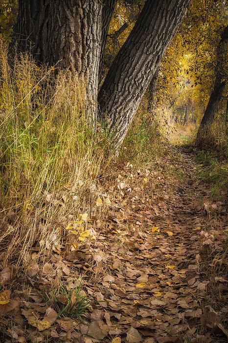 The Fall Way Home Print by Michael Van Beber