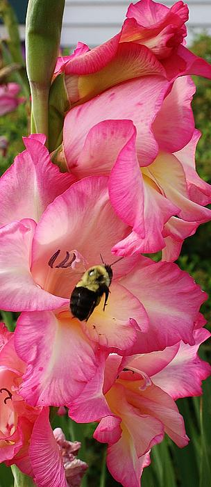 The Flight Of The Bumble Bee Print by Bruce Bley