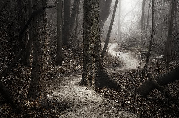 Scott Norris - The Foggy Path
