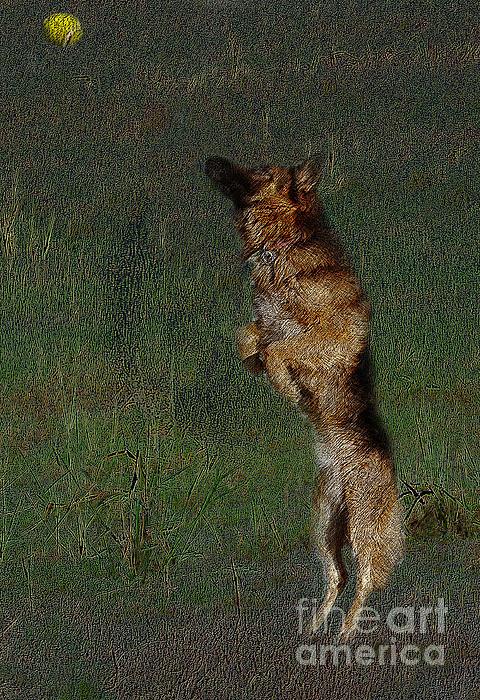 The German Shepherd Great Dog Print by Manjot Singh Sachdeva