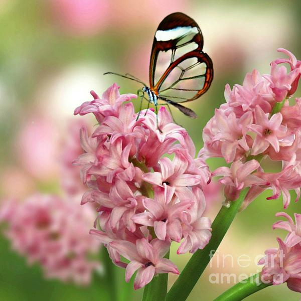 The Glasswing Print by Morag Bates